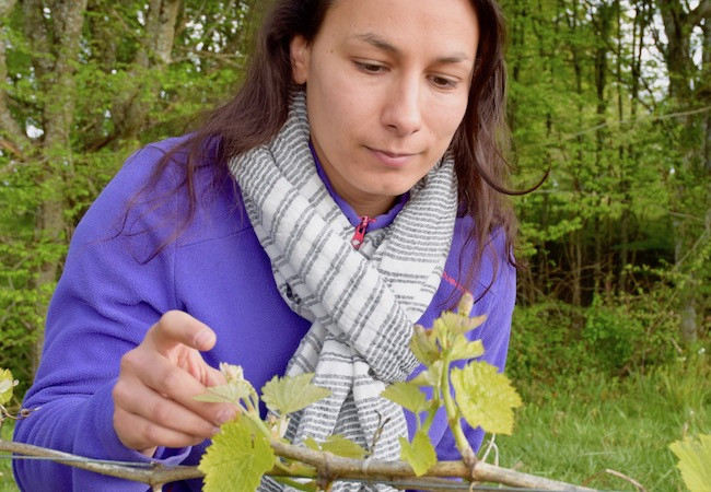 sarah observe les vignes