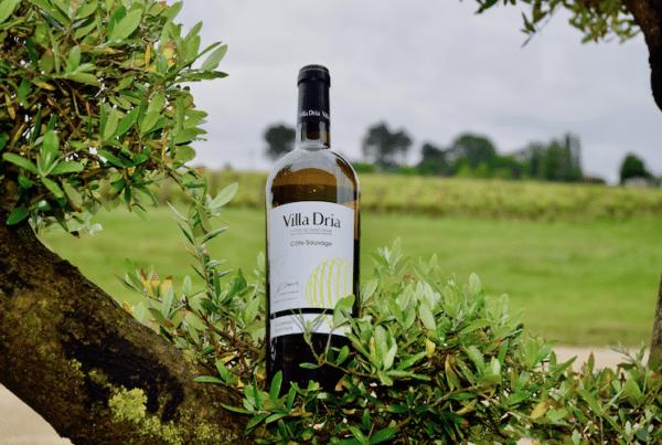 Vin blanc Côtes de Gascogne sur un olivier devant les vignes